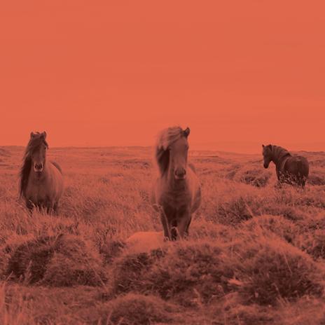 Wie de Pferde bilden wir Beziehungen in de Familie - oft unbewusst - wir wollen aber auch frei sein wie diese Pferde, ungebunden, frei, glücklich in der Natur