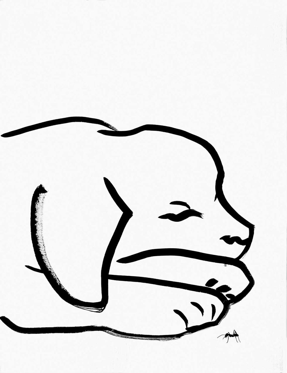 dogpoppyOK-4949web.jpg