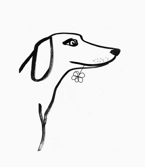 dog-IMG_4962web.jpg