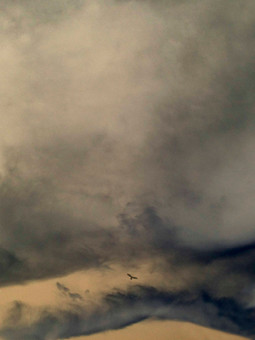Quand les nuages s'amoncelèrent sur la crête, Buse s'éleva, plus haut, vers la lumière