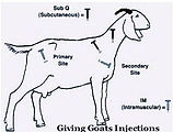 Goat-Injection-Sites.jpg