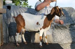 Hillviewfarm mini milkers