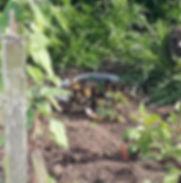 Ducks 6.jpg