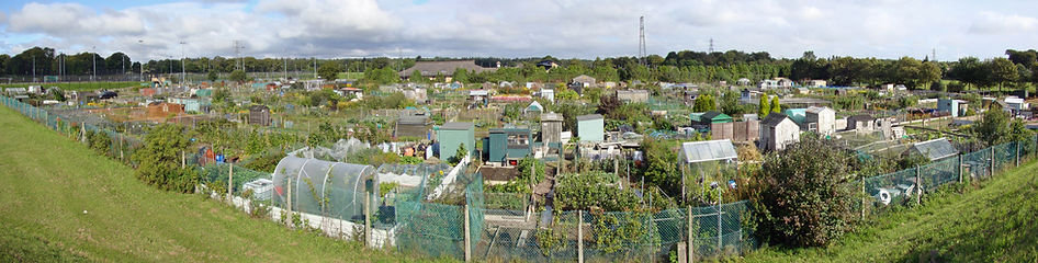 Panorama of Slopefield allotments.