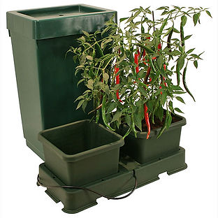 Autopot  hydroponic system used at Slopefield allotments