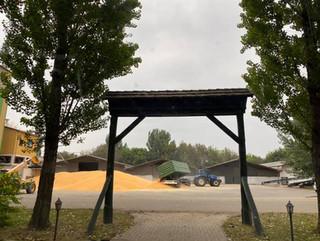 Kukorica szárítás