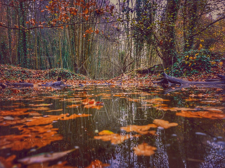 Woods and Water