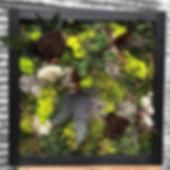 moss 2 wall.jpg