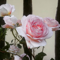 Take time to smell the roses. _It's Friday evening and we're taking a moment to sit, relax and enjoy