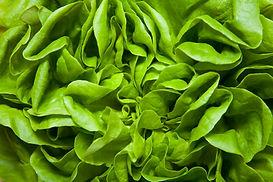 Ventas de verduras frescas