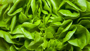 Why does lettuce keep getting contaminated by E.coli?