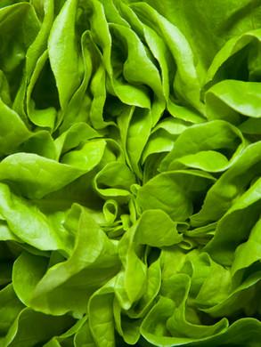 Зелень для салатов