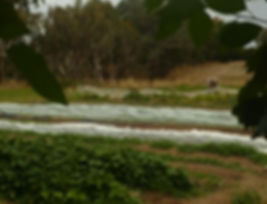 CSA farm