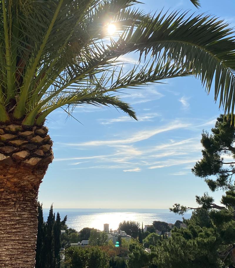 Palmier sur Cassis