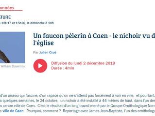 Reportage sur le Faucon pèlerin à Caen