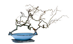 Large Bowl Twisted Branch - Stone