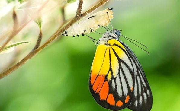 butterfly-cocoon-580x358.jpeg