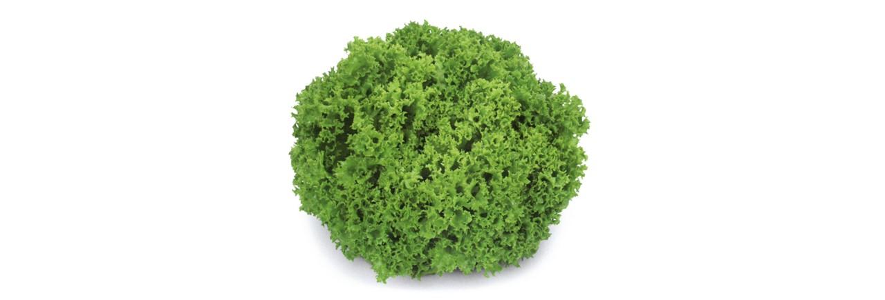 Lettuce (6)