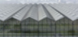 glass greenhouse venlo type.jpg