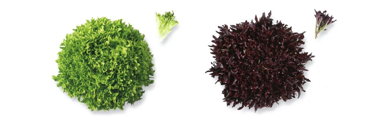 Lettuce (8)