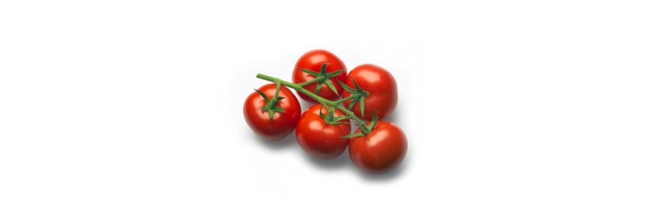 Medium Cocktail tomato vine (4)