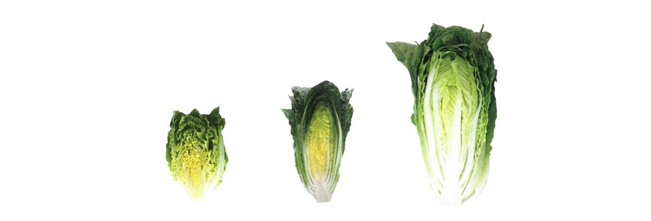 Lettuce (3)
