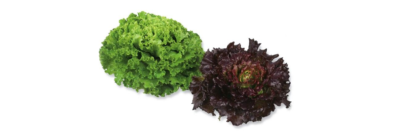 Lettuce (1)