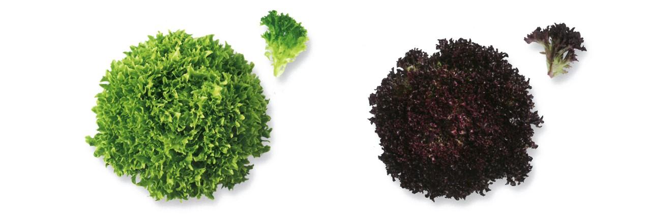 Lettuce (9)
