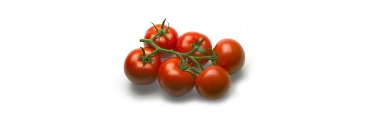 Medium Cocktail tomato vine (9)