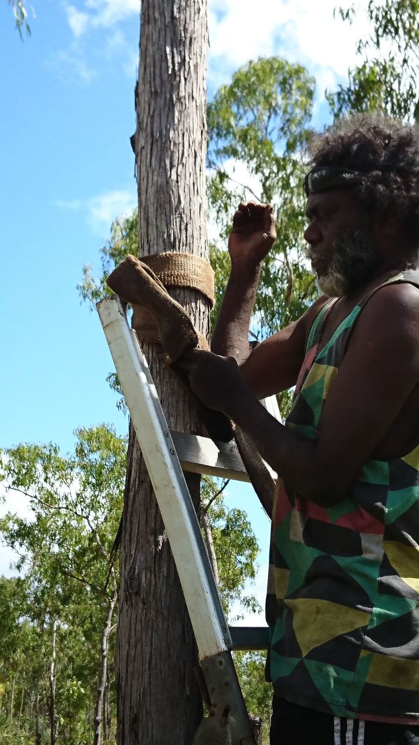Knowledge Water indigenous business development selected tree clearing