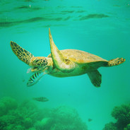The Great Barrier Reef - Is it really dead?