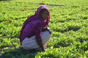 Bangladesh - Top Tips