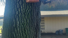 Owl Boxes at Swenson