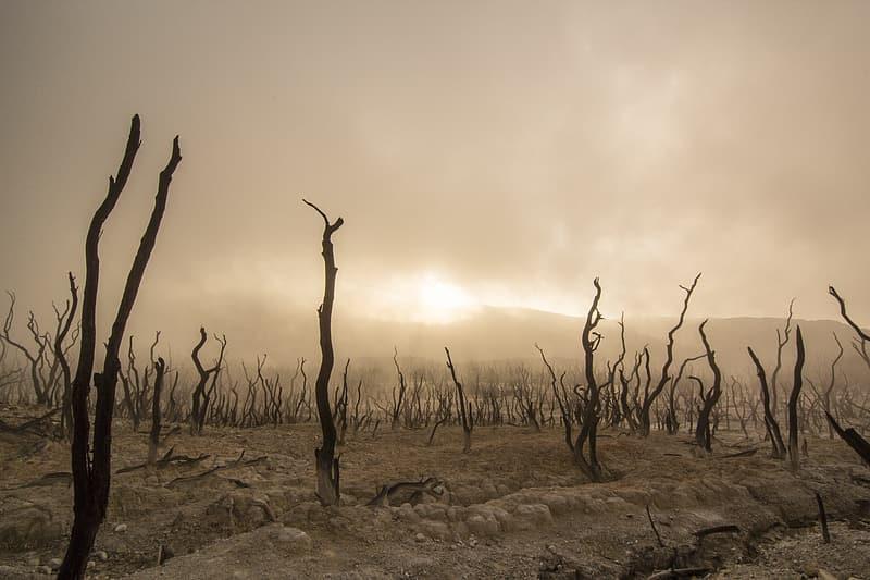 Bare trees on a dusty plain.
