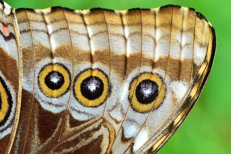 """Macro image of black and yellow """"eye"""" spots on a moth's wing."""