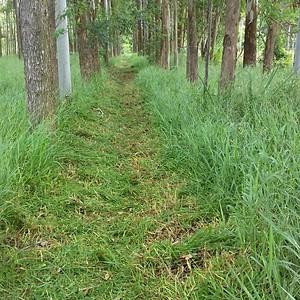 2ª Caminhada Ecológica e Corrida de trilha