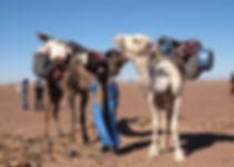 Randonnée Chamelière désert Sahara Maroc