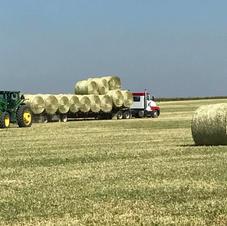 Everyone learns to drive during haying season