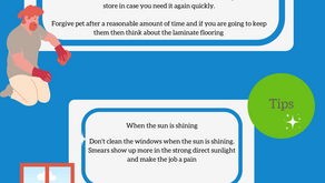 Cleaning tips with Ann 'Dustpan' - Pet Stains