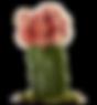 pink cactus.png