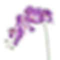 purple flower.png