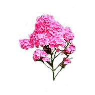 pink flower1.png