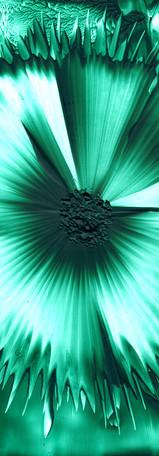 Dream flower.jpg