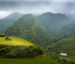 High level rice fields