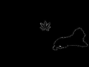 sensi logo (1).png