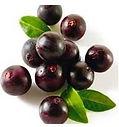Acai Berry.jpg