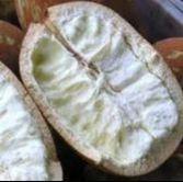 cupuacu-butter.jpeg