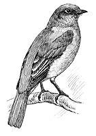 Bluebird_(PSF).jpg