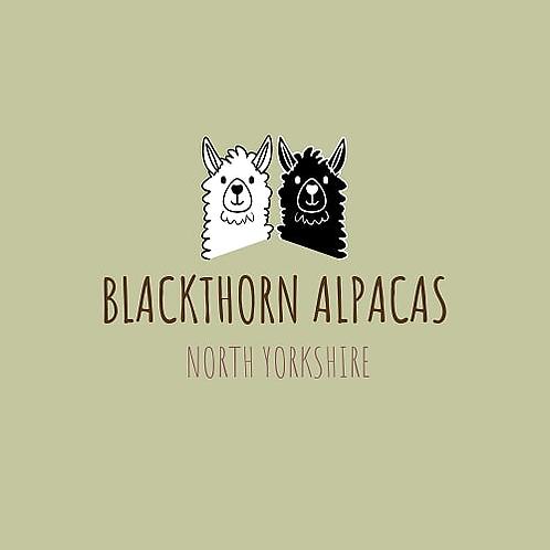 Alpaca Adoption Bronze