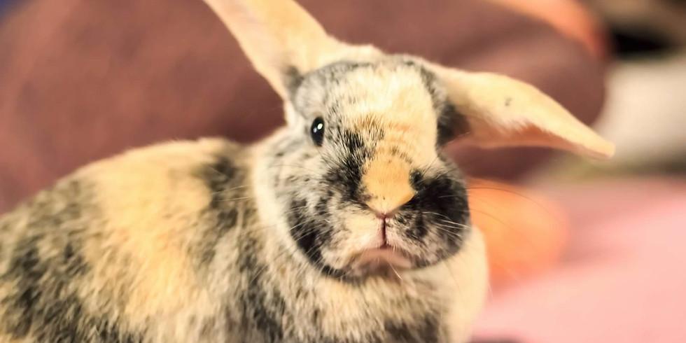 Rabbit Rescue of MN Romp & Spa/Adoption Event